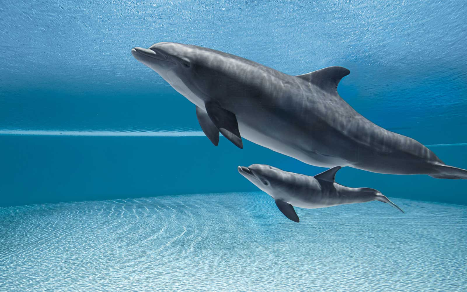 Dolphin pushes dead calf's body through Florida waters in heartbreaking video