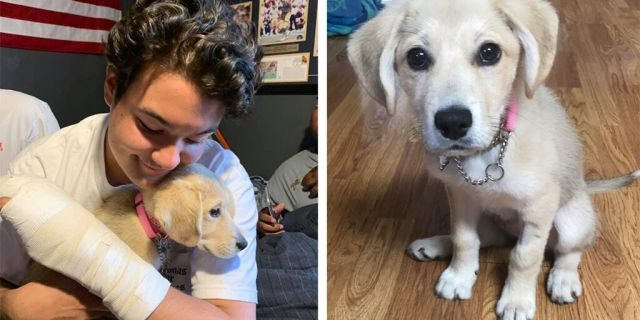Puppy who disappeared after owner crashed car is rescued in mountains 13 days later