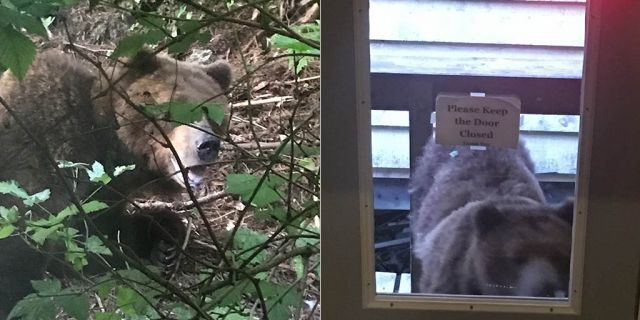 Pelican police determined that the bear's bold and unafraid behavior around humans posed a threat and needed to be put down, according to a report.