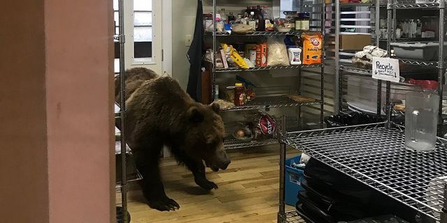 Daniels originally threw a salami at the bear, but thought better of his choice and lobbed dinner plates and the intruder.