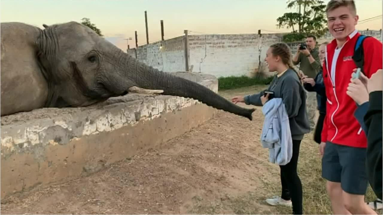 Elephant slaps tourist in the face in viral video: 'I was catapulted backward'