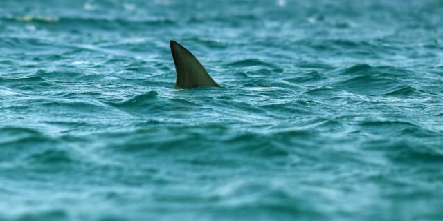 A shark bit a 16-year-old girl while she was vacationing in Florida, according to reports. (iStock)