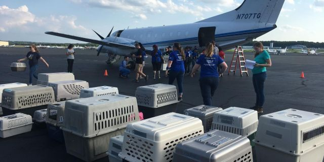 The animals were flown to Manassas Regional Airport in Virginia where they were then distributed to local animal shelters.