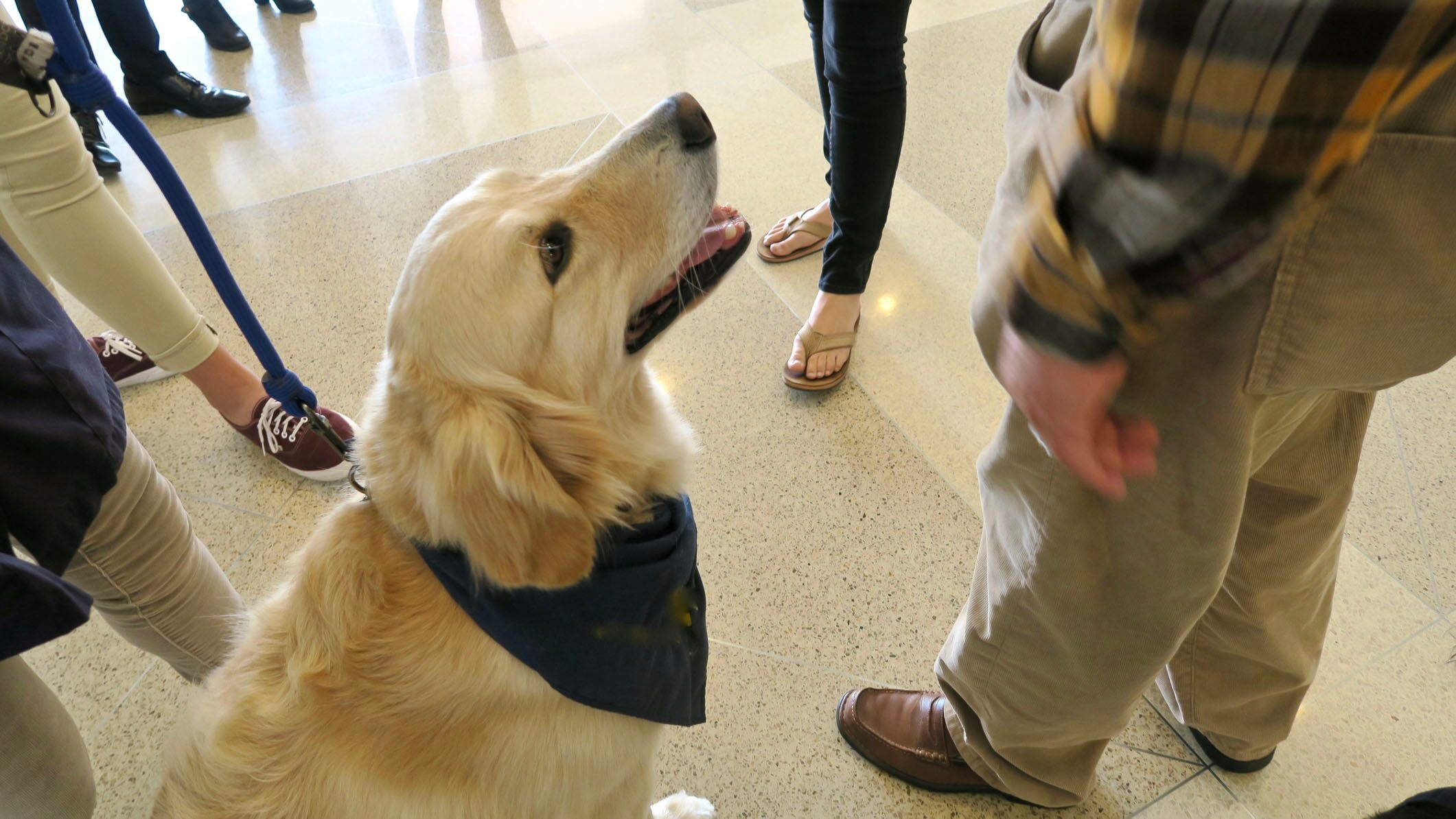 Service dogs travel to El Paso to comfort victims and first responders: 'These dogs can reach places in the heart no human can'
