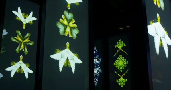 This Art Installation by Epson Bridges the Divide Between Nature and Technology – Adweek
