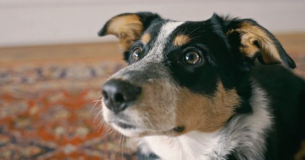 Won't Quit for Yourself? This Heartbreaking PSA Warns Smokers of the Toll on Their Pets – Adweek