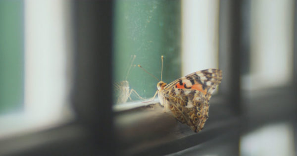 A Trapped Butterfly Is an Eerie Metaphor for Journalism in The Guardian's New Ad – Adweek