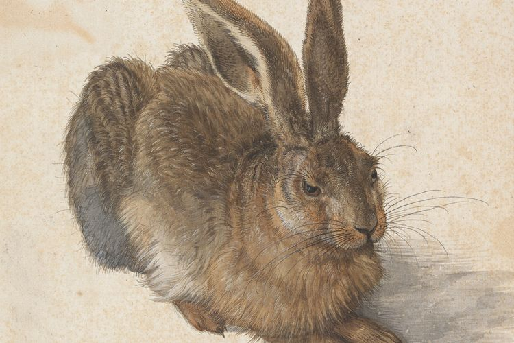 Albertina's Albrecht Dürer drawings enjoy a rare outing