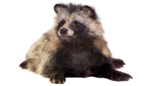 Someone set a trapped raccoon on fire in New Jersey, there's a reward out for information