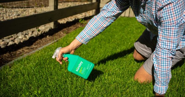 This Direct-to-Consumer Startup Wants to Make America's Lawns Toxin-Free – Adweek