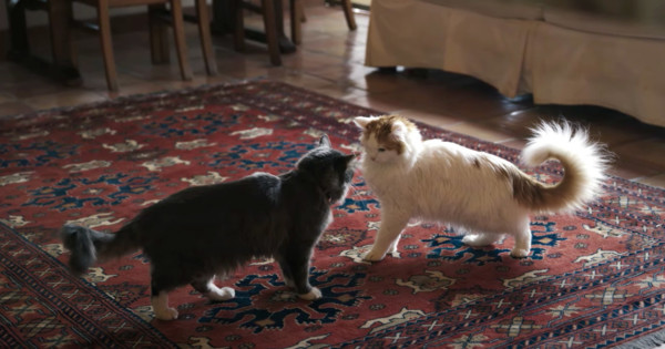 These Short Films for Sheba Show the Healing Powers of Cats