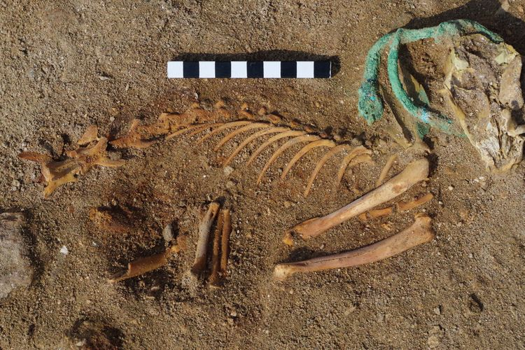Ancient Egyptian pet cemetery contained much loved cats and dogs pampered in their old age