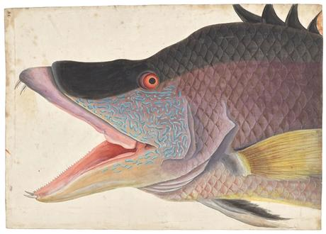 An exquisite study of the man who documented North America's wildlife in the 18th century